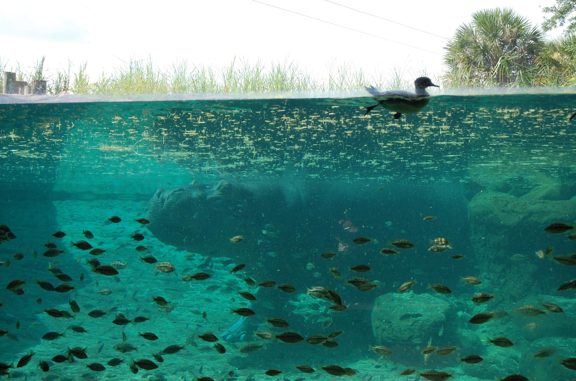 Open Air Aquarium Thinkvisual 39 S Blog